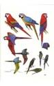 Tambopata-Bird-Checklist_9780952468769