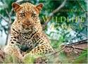 Wildlife-of-Africa_9781919939230