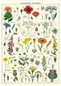 Wildflowers-Wrap_9781635444032